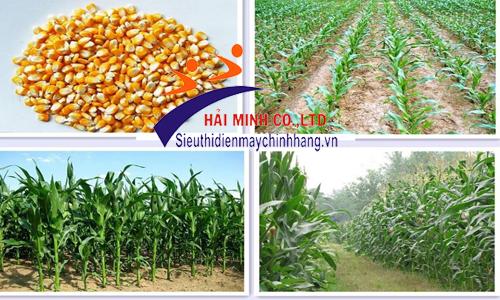 Máy gieo hạt VNGH - 988
